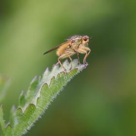 33 Special Prize - Best Macro Image - Paul tips